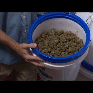 DIY: An Innovative, Automated Cannabis Curing System / Derek Gilman / Green Flower
