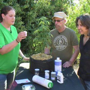 Create a Team of Cannabis Experts: Introducing Cannabis Training for Teams