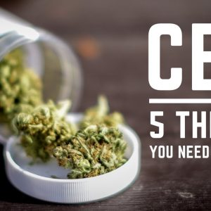 CBD: 5 Things You Need to Know