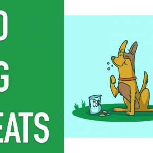 CBD DOG TREATS - Everything You Need to Know