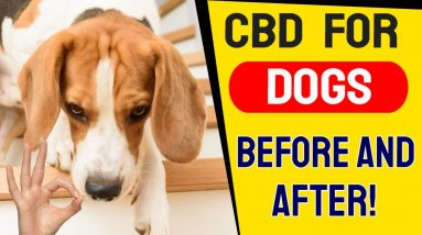 CBD For Dogs Before And After (RESULTS!) | CBD For Pets