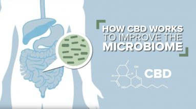 How CBD Works to Improve the Gut Microbiome