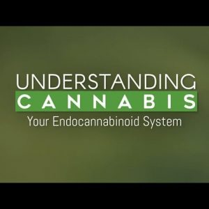 Your Endocannabinoid System Explained (aka Why Cannabis Works with Your Body) / Green Flower