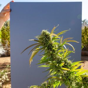 Regenerative Cannabis Cultivation Techniques: Benefits of Compost Tea/ Dr. David White /Green Flower