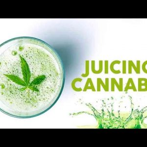 Cannabis Juicing: How To, Basics & Benefits - Mandee Lee - Try This / Green Flower
