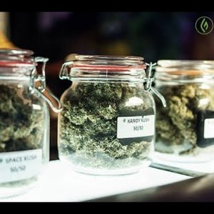 Core Knowledge Every Cannabis Budtender Should Know / Max Montrose / Green Flower