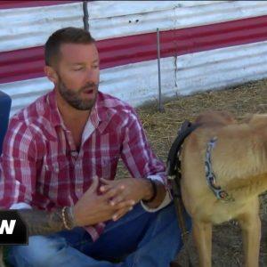 Rescue treats dogs with CBD oil