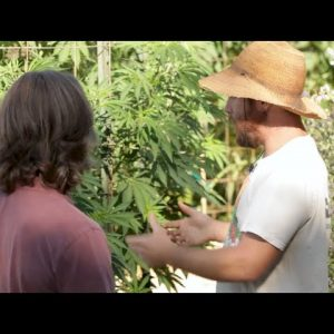 Cannabis Cultivation: Site Selection and Layout - Casey O'Neill - Green Flower Cannabis Cultivation