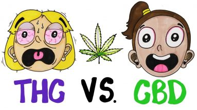 THC vs CBD: What's In Your Weed?