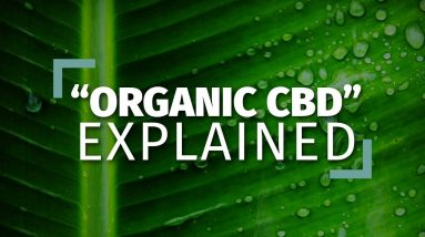 The Truth About Organic CBD Oil