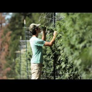 Off-Grid Cannabis Cultivation & Harvesting (Part 1): Pete Pietrangeli & Tyler Trudeau / Green Flower