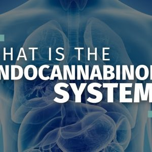What is the Endocannabinoid System? [Ultimate Guide]