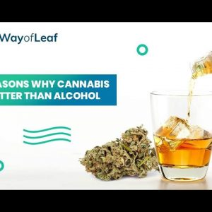 7 Reasons Why Cannabis Is Better Than Alcohol