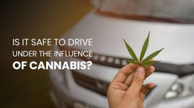 Cannabis and Driving - Is It Dangerous To Drive Under The Influence?