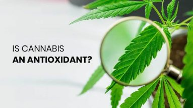 Is Cannabis an Antioxidant?