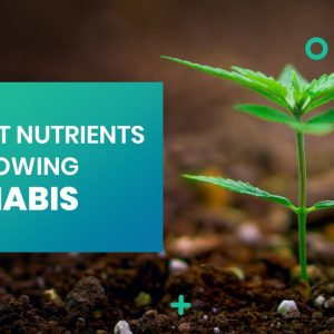 The Best Nutrients For Growing Cannabis