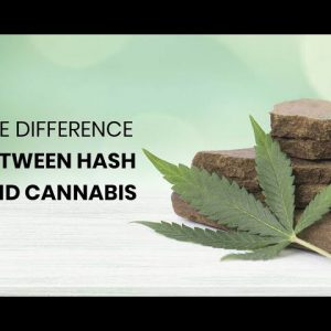 The Difference Between Hash and Cannabis