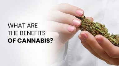 What Are the Benefits of Cannabis Use?