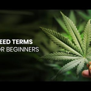 Major Cannabis Terms You Need to Know