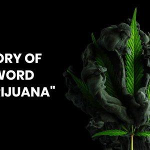 """History Of The Word """"Marijuana"""""""